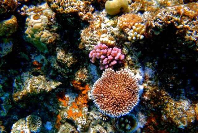 7 Wonders of the Backpacker's World | Great Barrier Reef