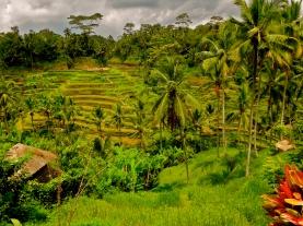 Bali Rice Terraces | 7 Wonders of the Backpacker's World