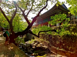 Hiking along the river to a nearby Buddhist temple outside of Ulsan