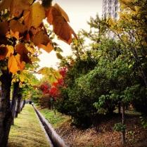 Autumn in Ulsan