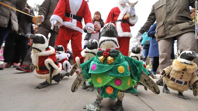 Penguin March at Everland Amusement Park in Yongin, South Korea. Source: CNN