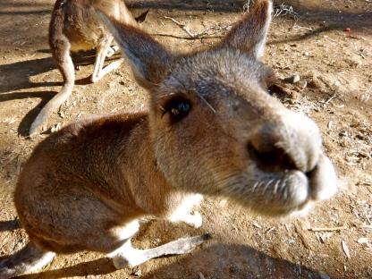 Currumbin Wildlife Sanctuary, Gold Coast, Australia