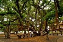 Lahaina Banyan Court Park