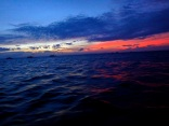530am dive to see the thresher sharks!