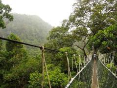 Taman Negara | Source: Hotels Travel Pal
