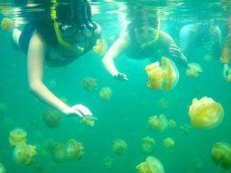 Kakaban Island | Source: symbiosis-travel.com